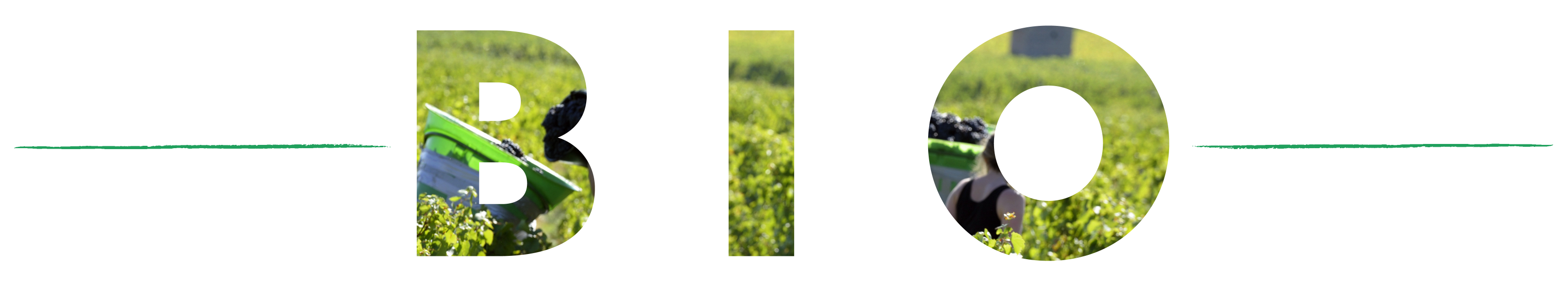 banniere-transition-bio